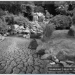 emWave Desktop garden game.